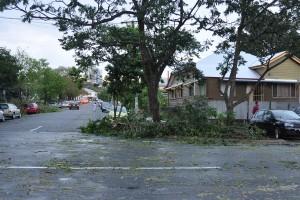 Trees & Debris