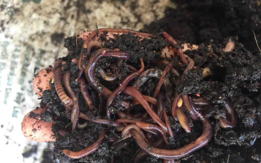 Worm farming in the city